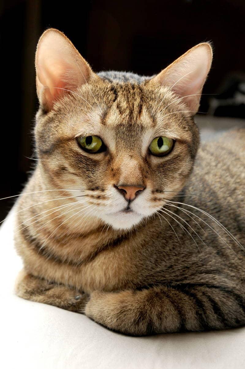 Bộ sưu tập hình ảnh Mèo chất lượng cao miễn phí. Mã Tải: cat-id-2159842