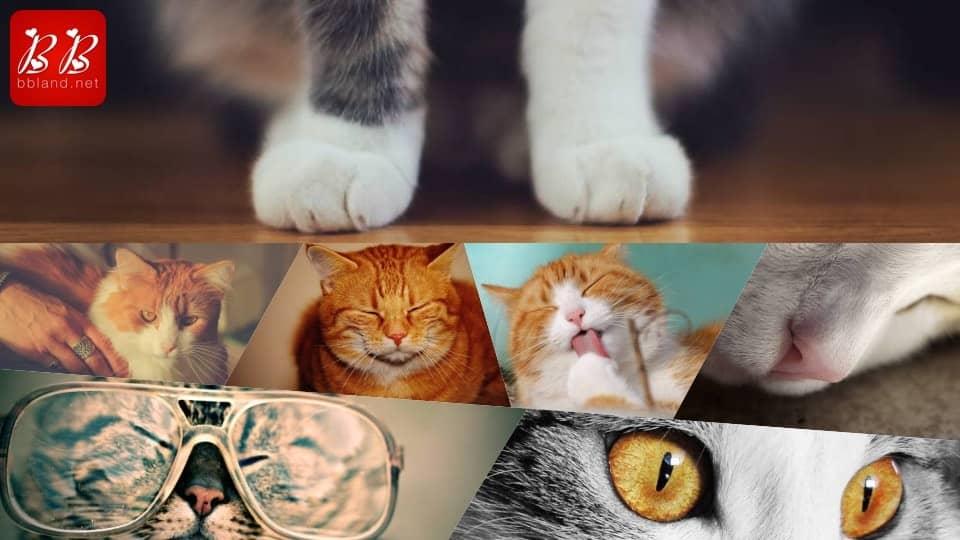 [333 Pics] Bộ sưu tập hình ảnh Mèo chất lượng cao miễn phí